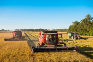 Delta Blues Rice harvest 2015 COMPRESSED-42